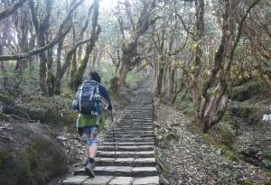 abc-trek-7-days