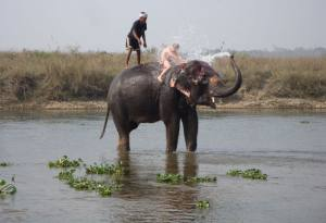 Elephant Mega-Event to Hold in Chitwan from Dec 26-30