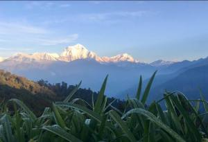 Ghorepani Poon Hill Trek: Best Seasons, Guide, Cost and Itinerary