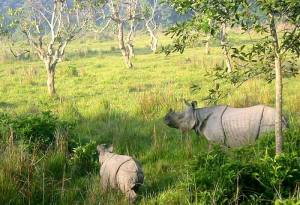 National Parks in Nepal: A Brief Introduction