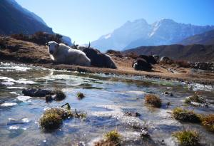 What are the Protected Areas in Nepal? List of National Parks, Conservation Areas, Wildlife Reserves and Hunting Reserve of Nepal