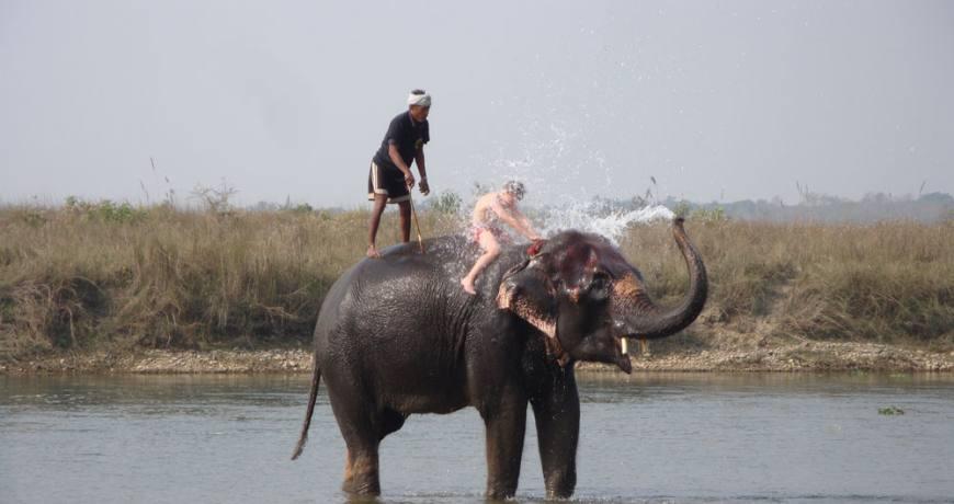 Elephant Bath at Chitwan National Park