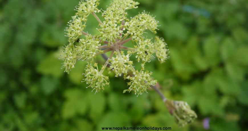 Flora and Fauna on Kajin Sara Lake Trekking Route