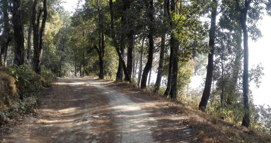Nagarkot Hiking Trail (Hike with Nepal Kameleon Holidays (WhatsApp: +977 9851159455)