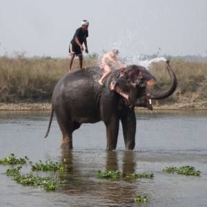 Chitwan Jungle Safari with Tharu village Tour
