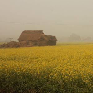 Chitwan Tharu Village Tour