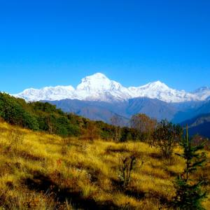 Volunteer Trekking and Jungle Safari in Nepal